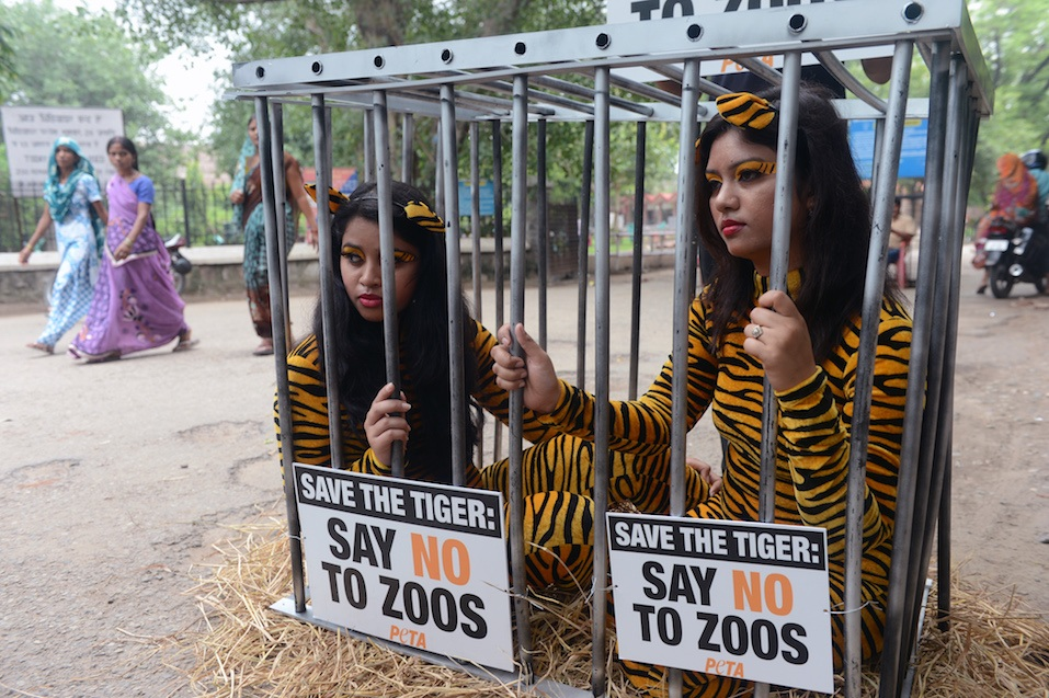 Activists from the People for the Ethical Treatment of Animals (PETA) pose with body suits resembling tigers