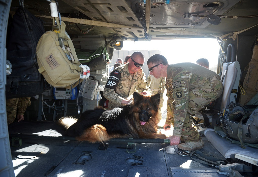 A US soldier (R) and a Polish soldier handle a military dog inside the cabin of a UH-60 Black Hawk medevac helicopter.