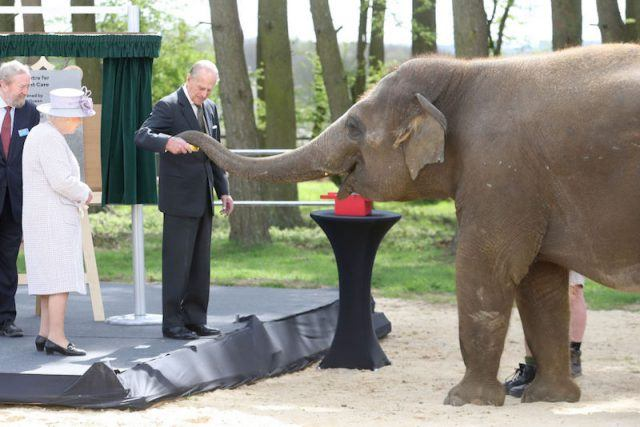 Prince Phillip feeding an elephant.