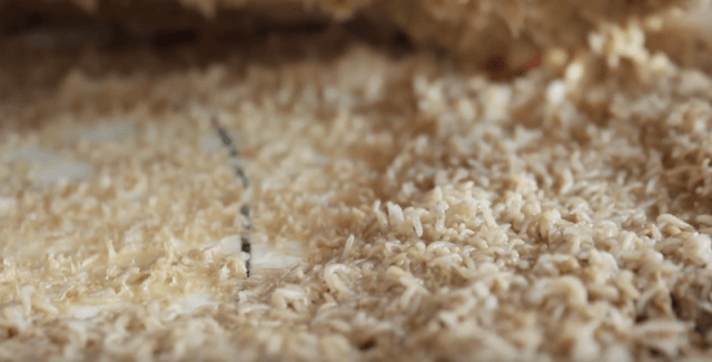Larvae and cheese seen close up.