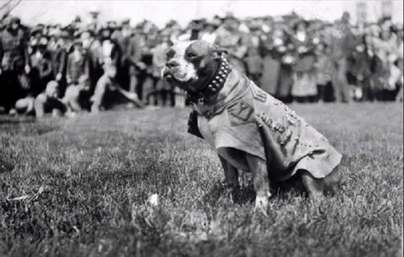 Sergeant Stubby stands in front of his regiment