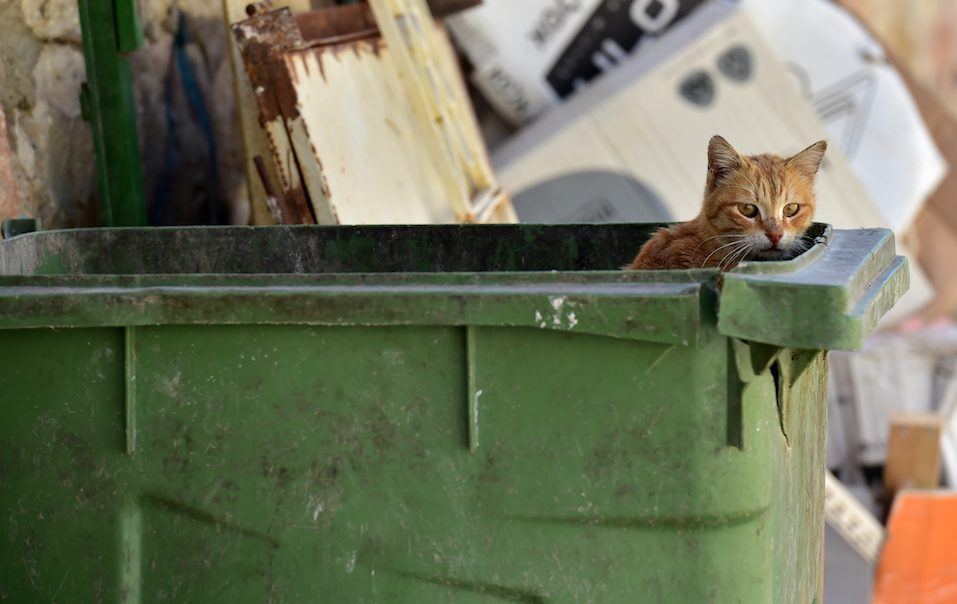 Stray cat in the garbage bin