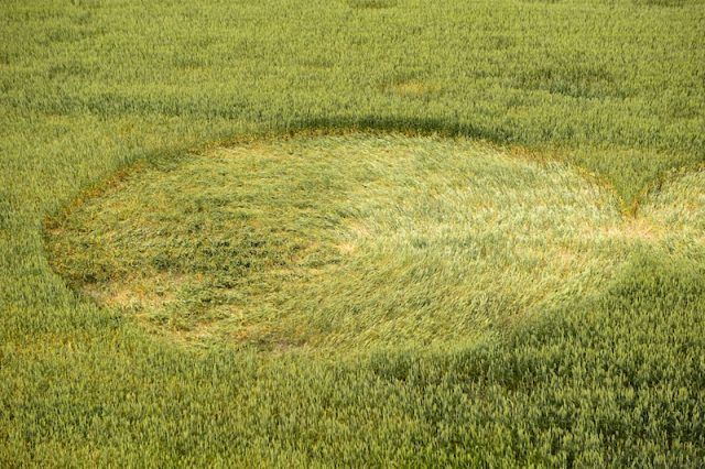 A crop circle seen from above.