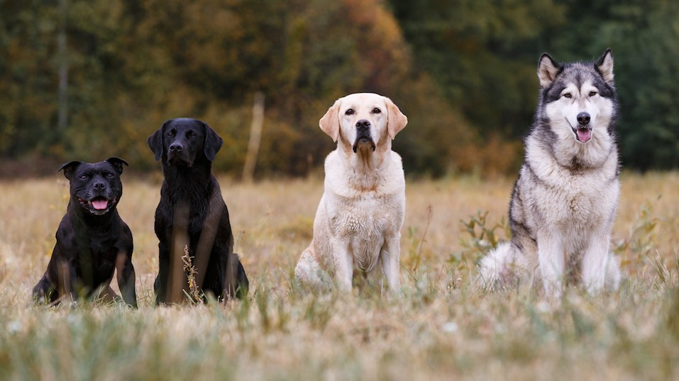 Why It's So Hard to Become a Dog Walker
