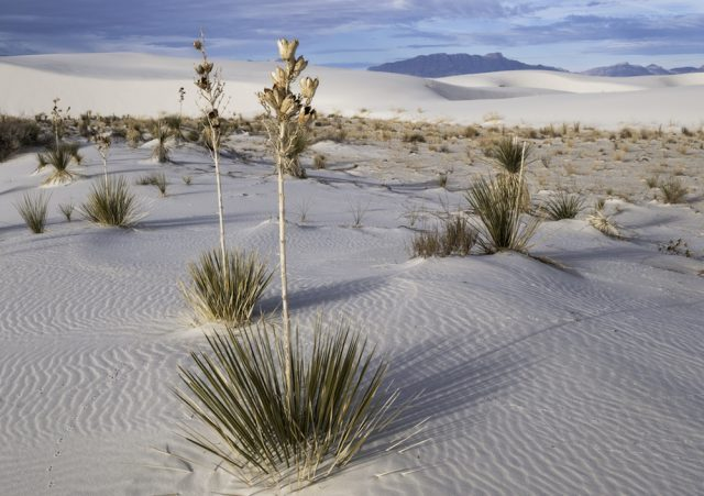 White Sands National Monument is a preserve for a large portion of this dunefield located in New Mexico