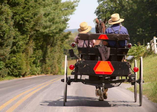 Two people riding in an amish buggy.