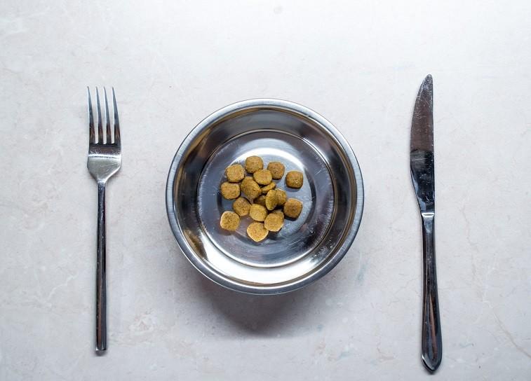 Dog food on a plate