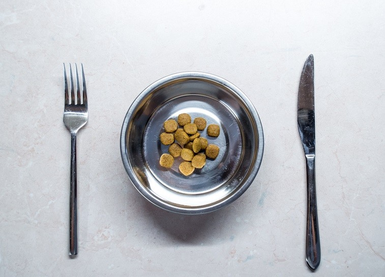 Dog food on a plate