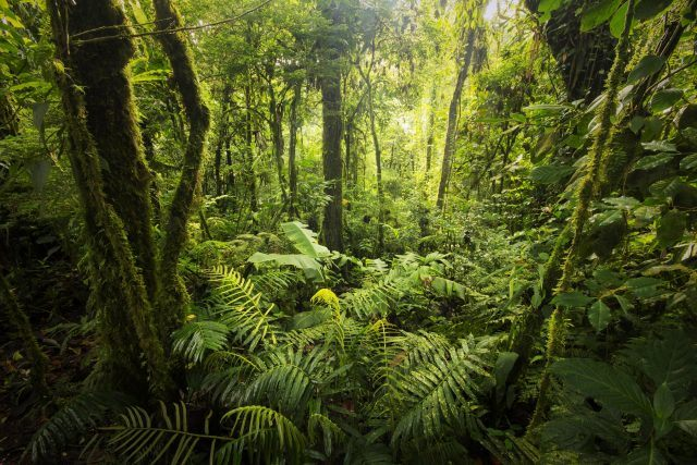 Vegetation and trees, forest from Costa Rica