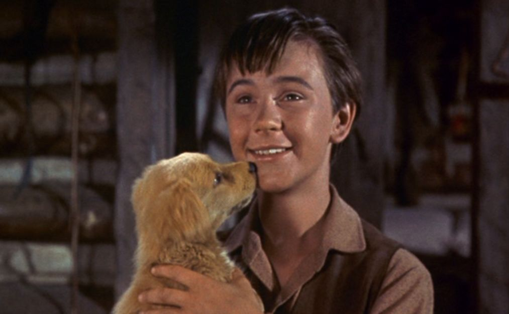 Tommy Kirk in Old Yeller