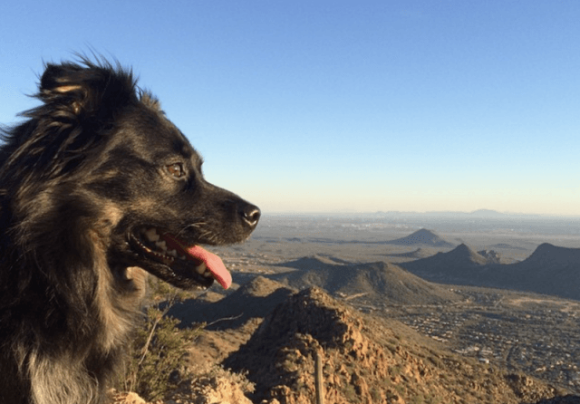 A black dog stands in front of a mountain view.