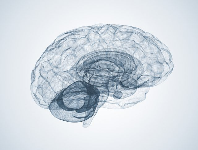 A sketch of a brain.