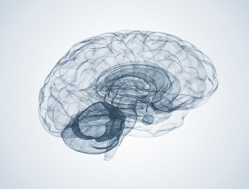 Wire frame brain model