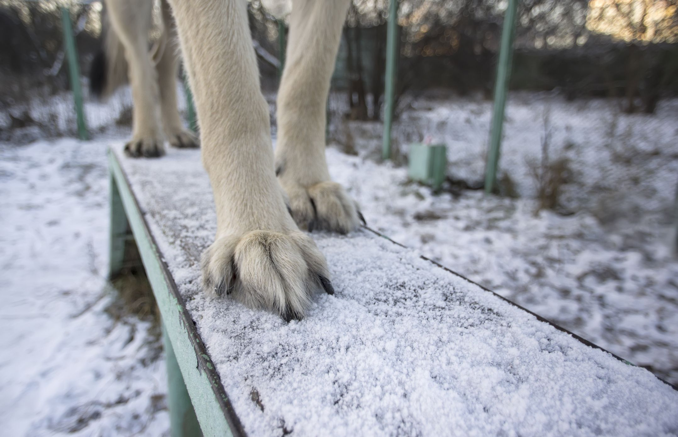 Close up of dog paws in winter