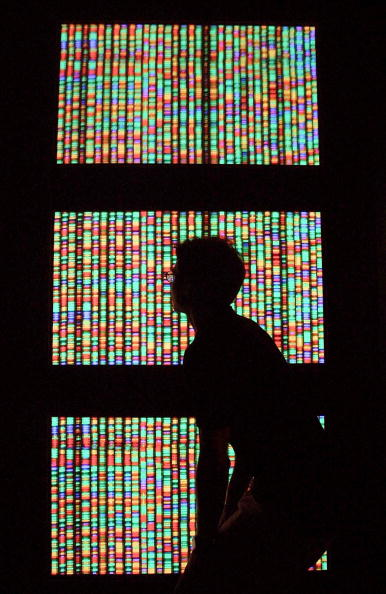 A visitor views a digital representation of the human genome at the American Museum of Natural History in New York City