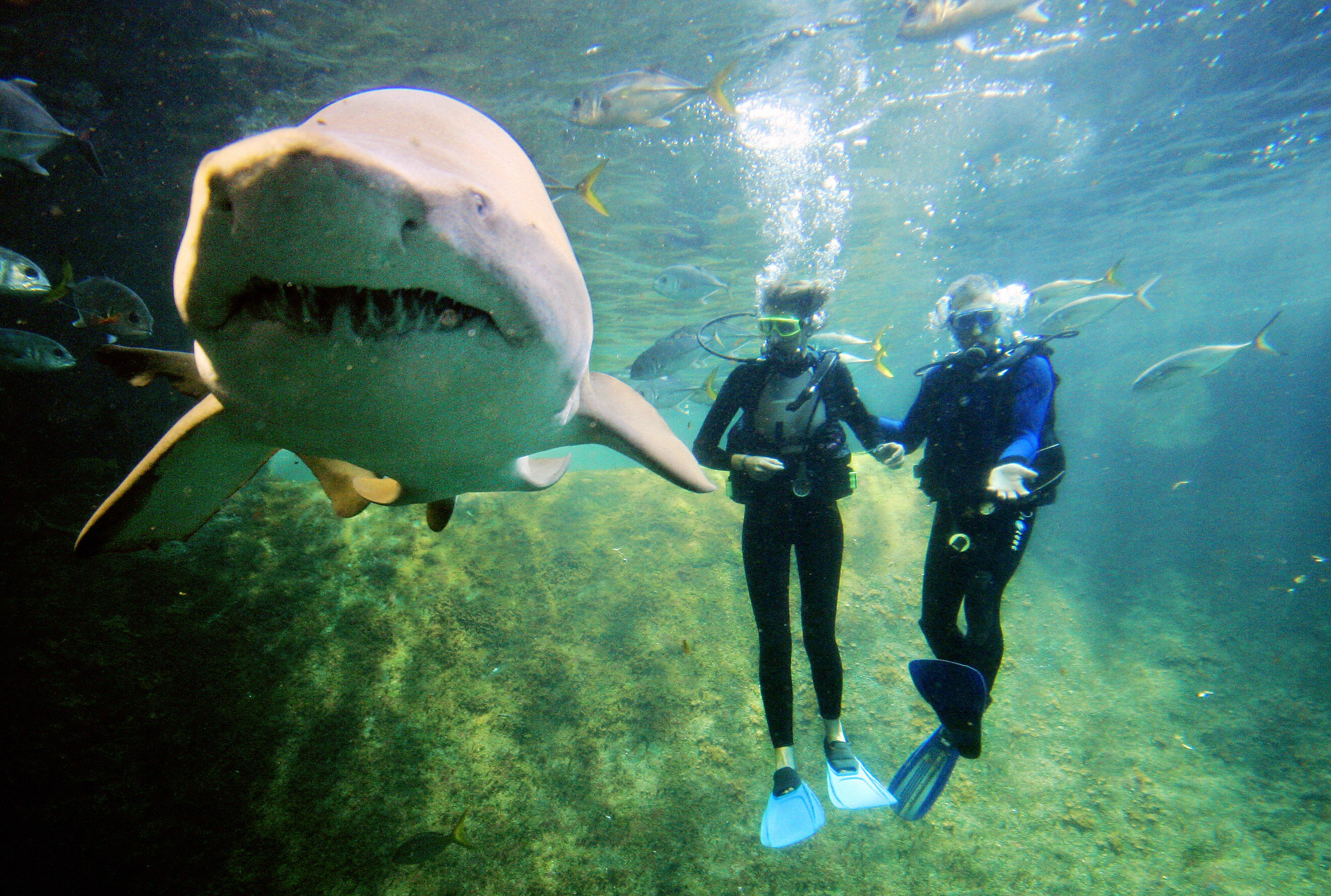 two windsurfers dive with a shark in a tank