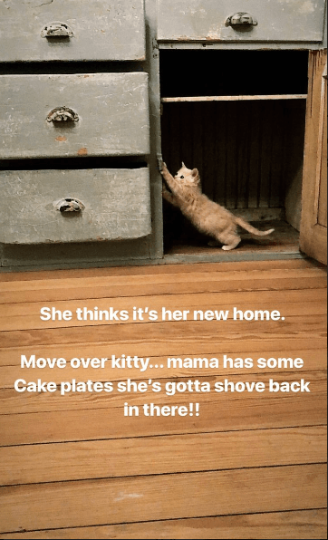 Joanna Gaines Clean out kitten