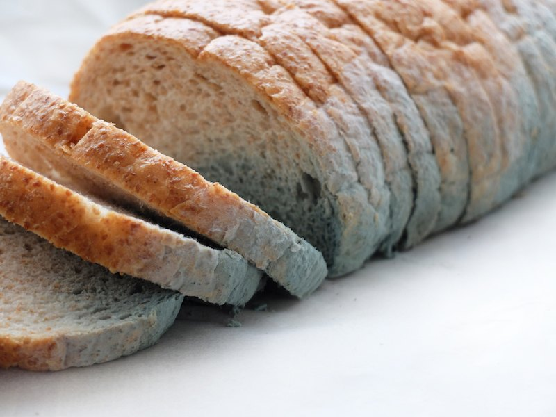 Slices of moldy bread.