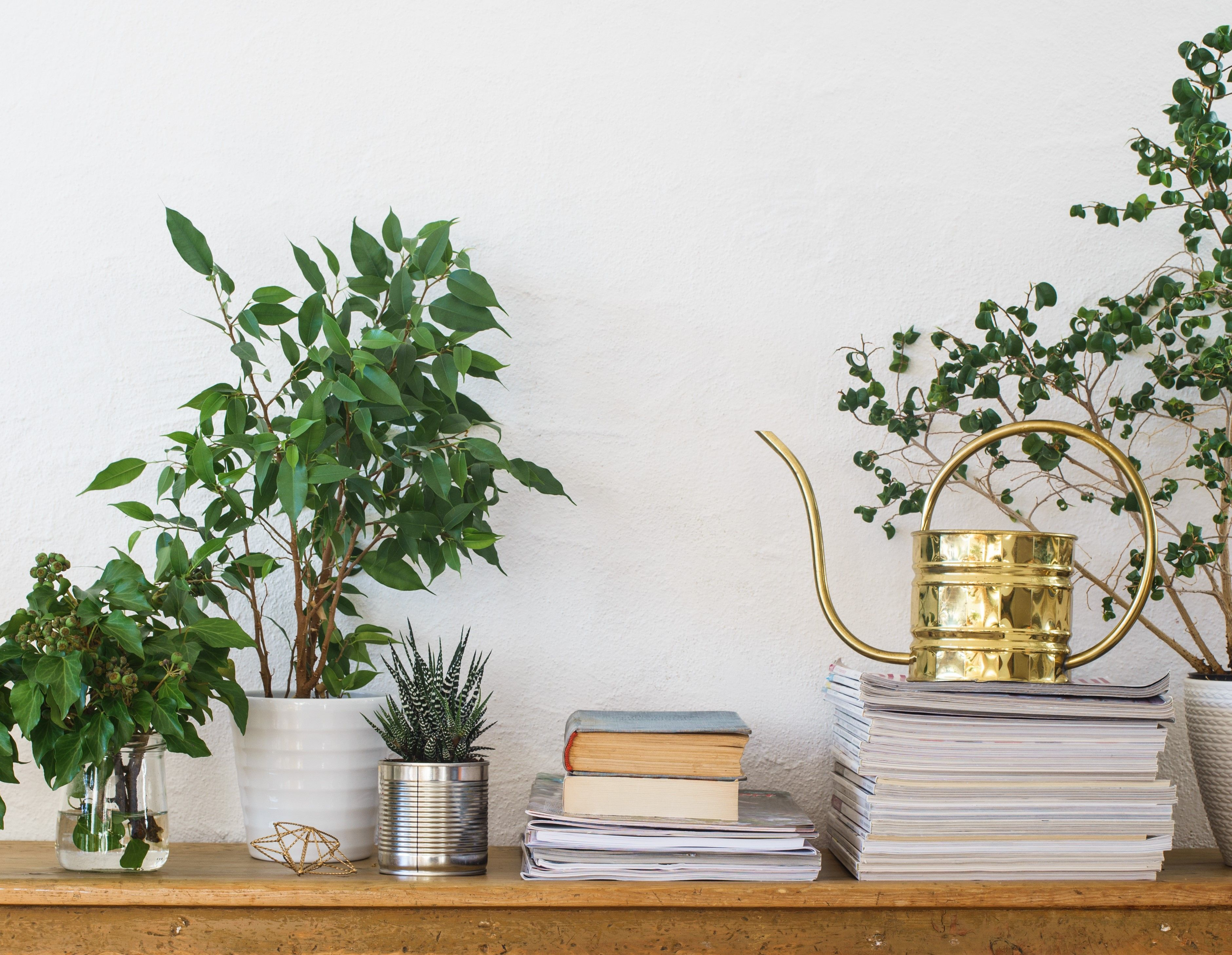 Houseplants, books, pile of journals and watering can