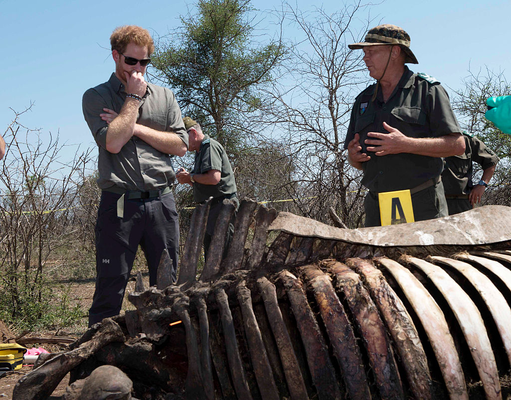 Prince Harry looks at the carcass of a rhino