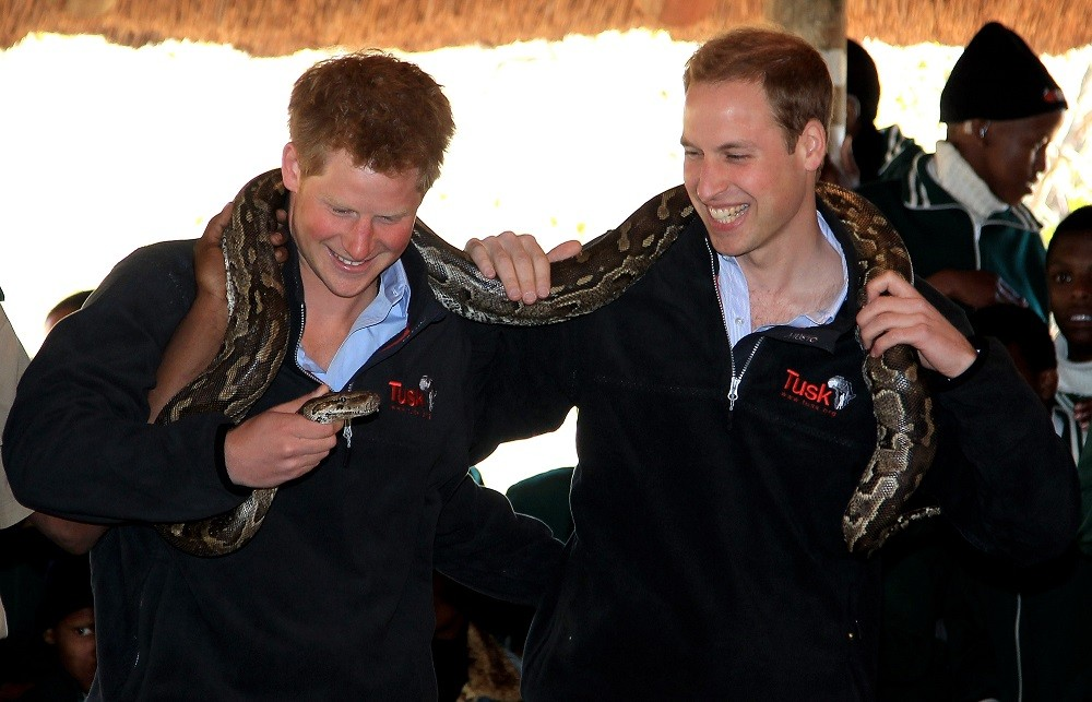 Prince Harry and Prince William hold an African rock python