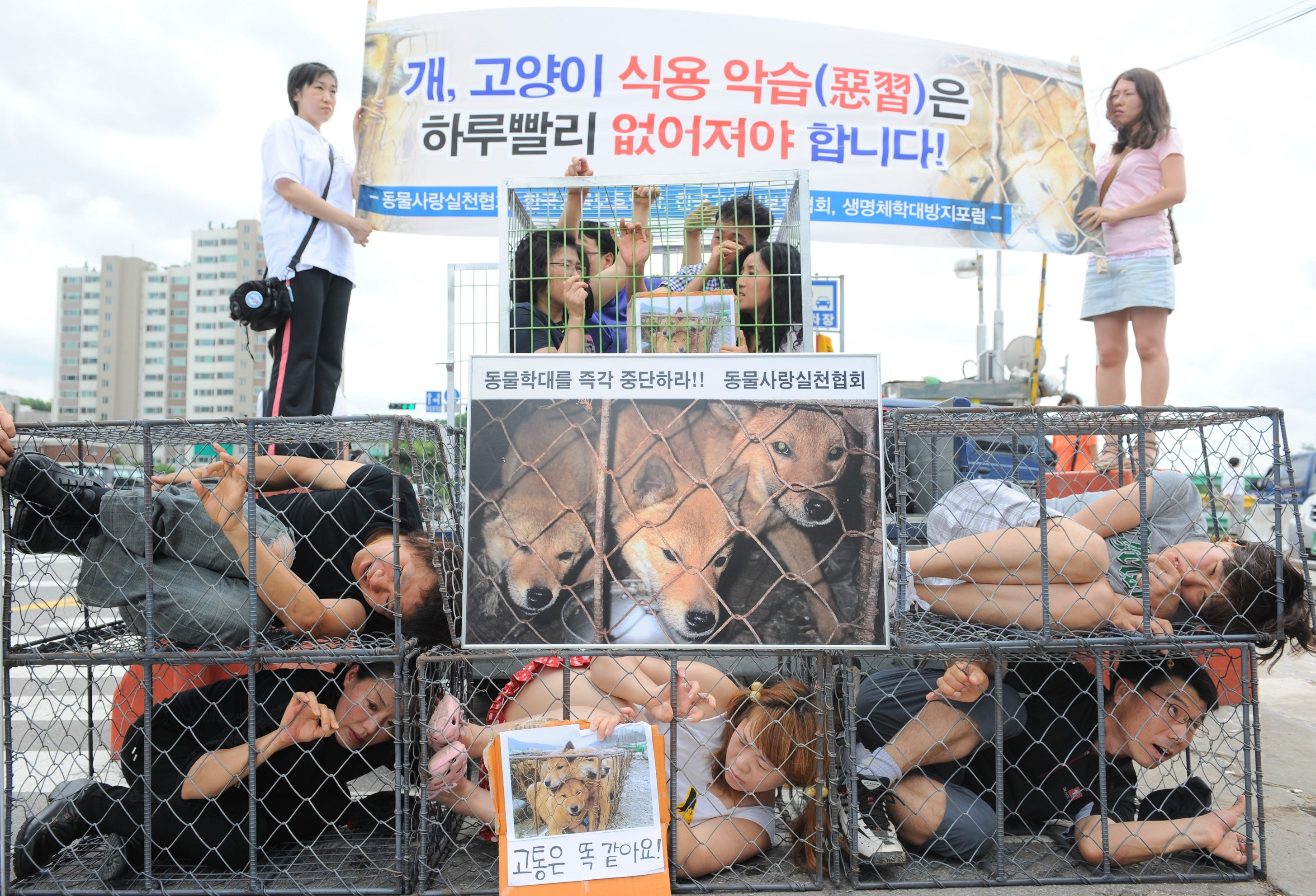 South Korean animal rights activists protest dog meat