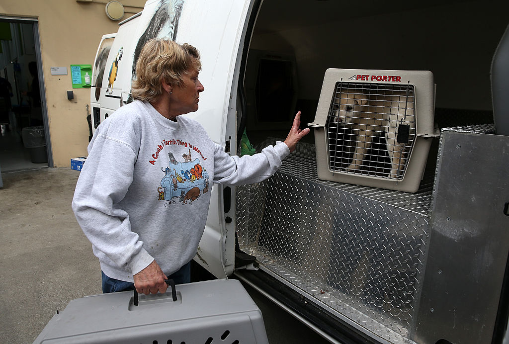 Rescued Dogs From a South Korean Meat Farm Brought to San Francisco for Adoptions