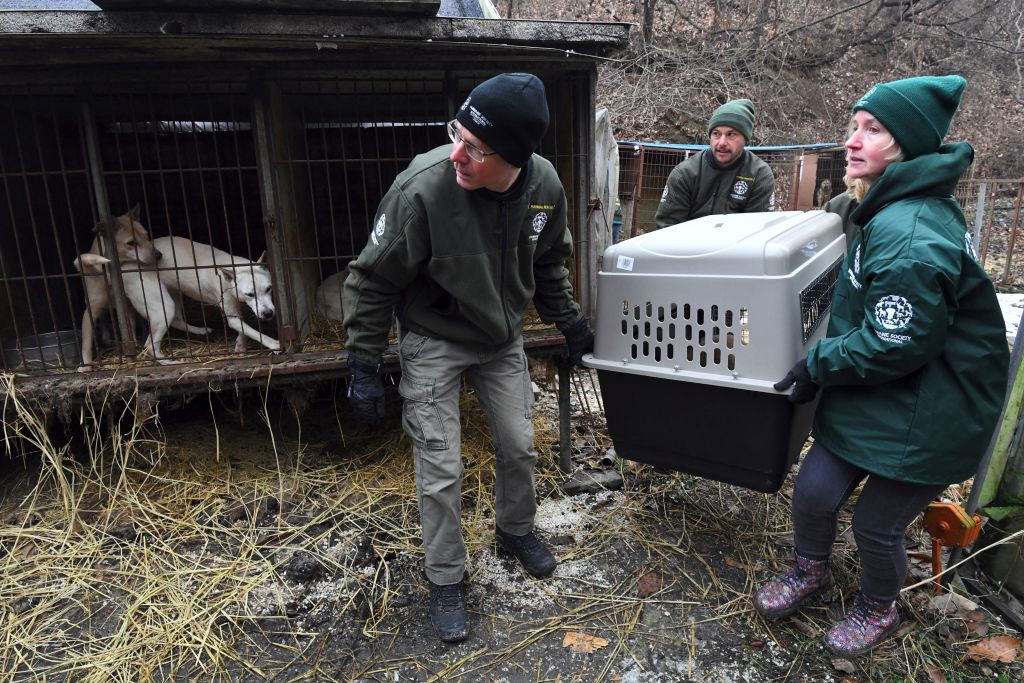 Korea dog meat farms