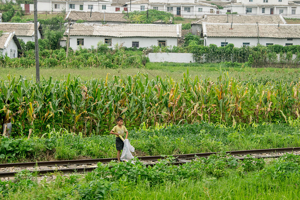 A boy collects corn cob beside railway