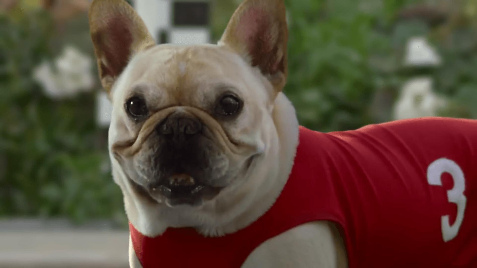 Sketchers dog racing commercial