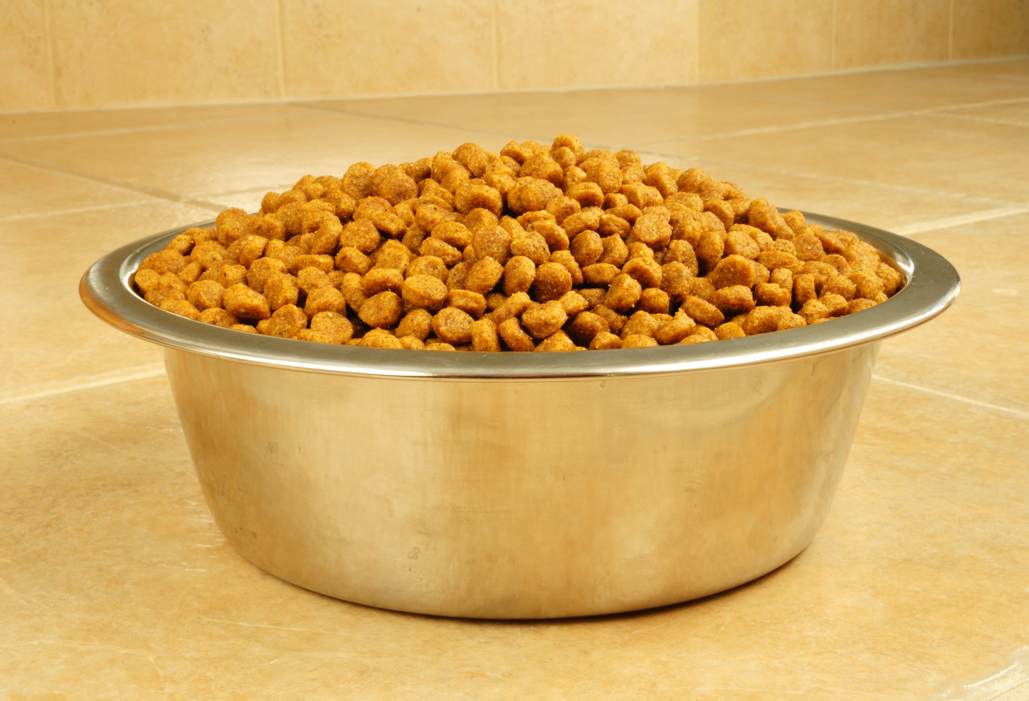 Dry Dog Food in a Stainless Steel Bowl on Ceramic Tile Floor