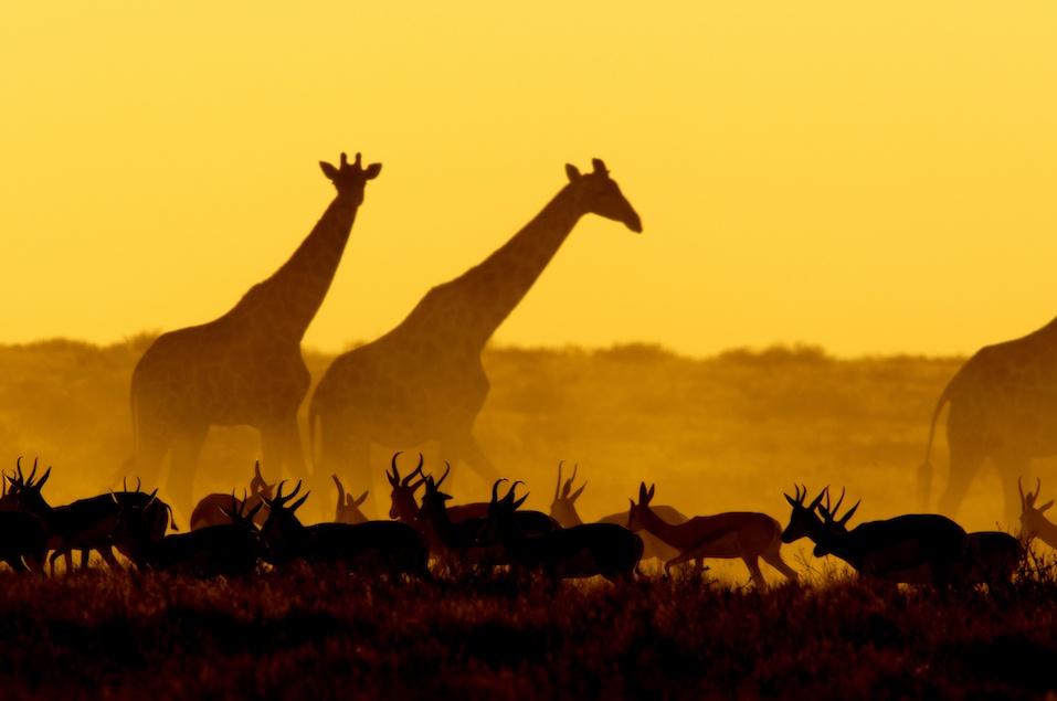 Sunset scene in Etosha National Park, Namibia