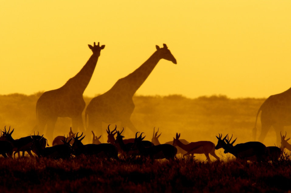 Sunset scene in Etosha National Park, Namibia