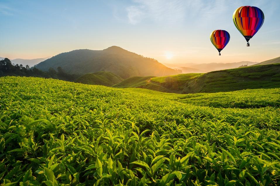 Malaysia tea plantation at Cameron highlands