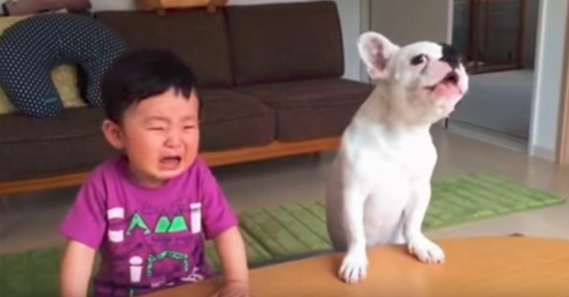 dog and baby crying
