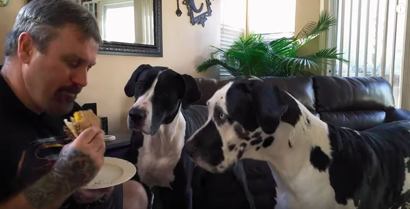 two dogs begging for a burger