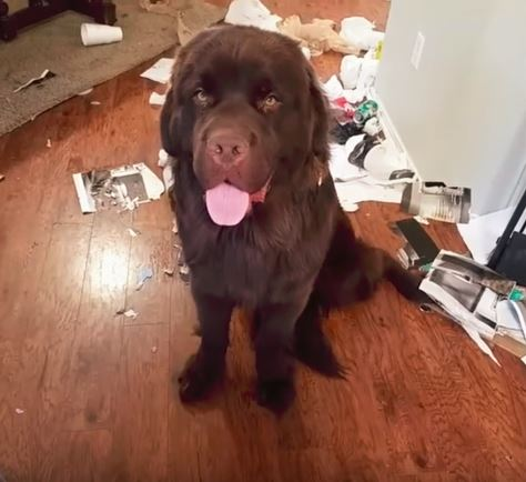 a guilty newfoundland