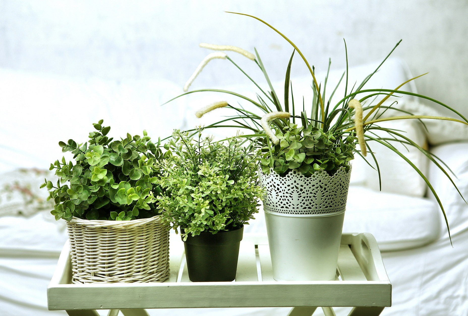 house plants in white pots on the bedroom background