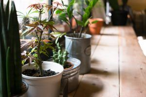 This Is the 1 Reason You Can't Keep Your Houseplants Alive