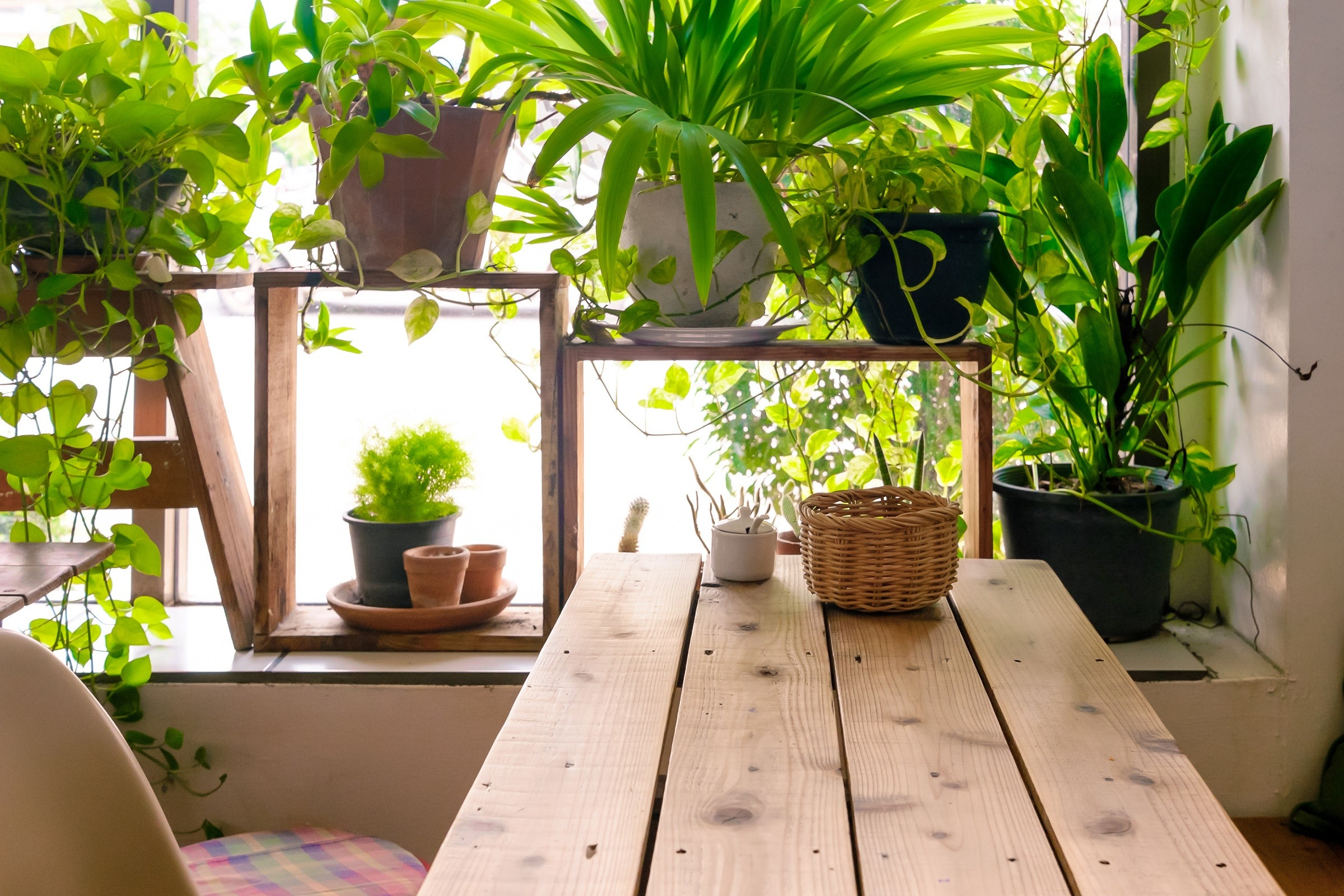 Table side the window and plants pot