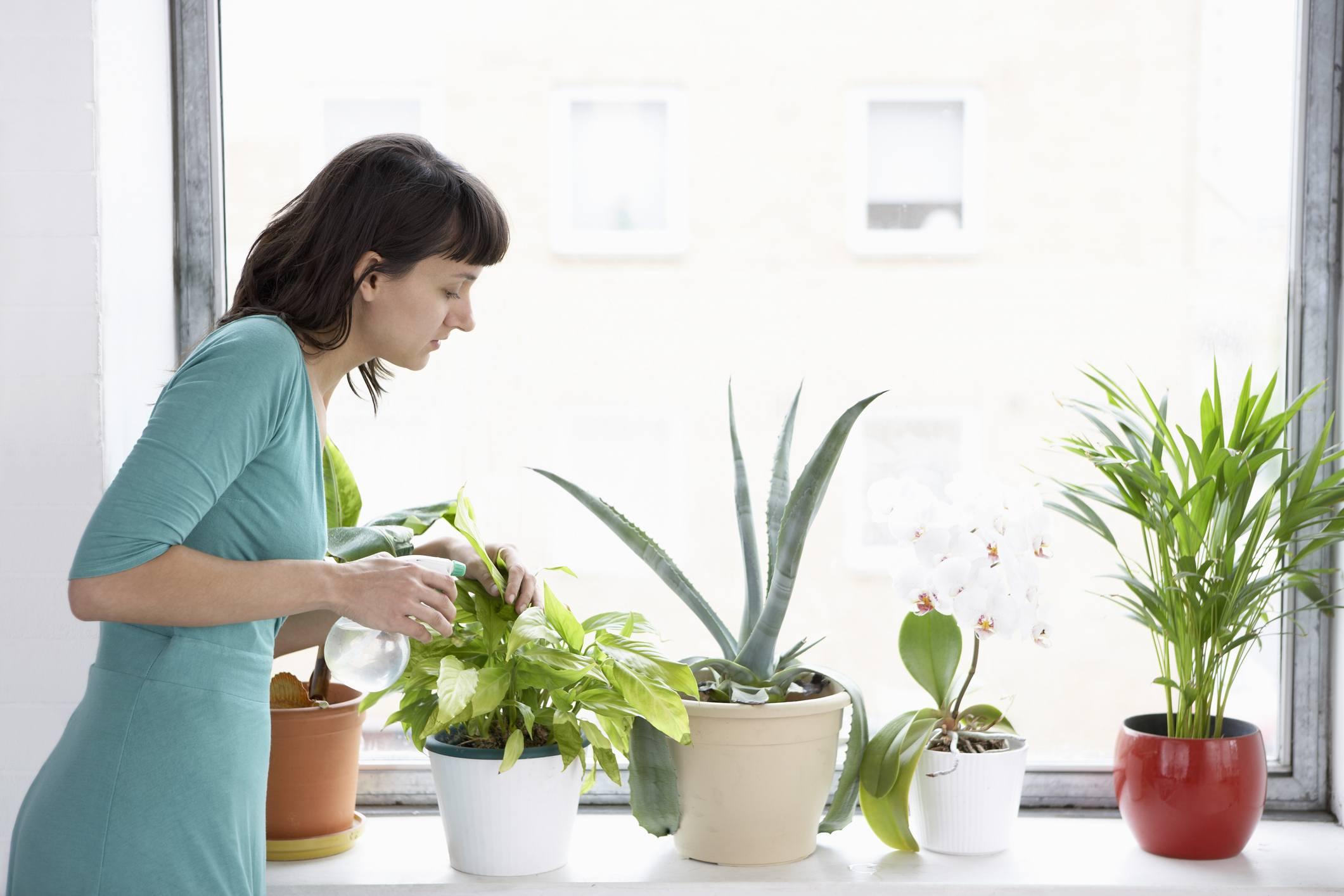 Woman Sprays Plants In Flowerpots
