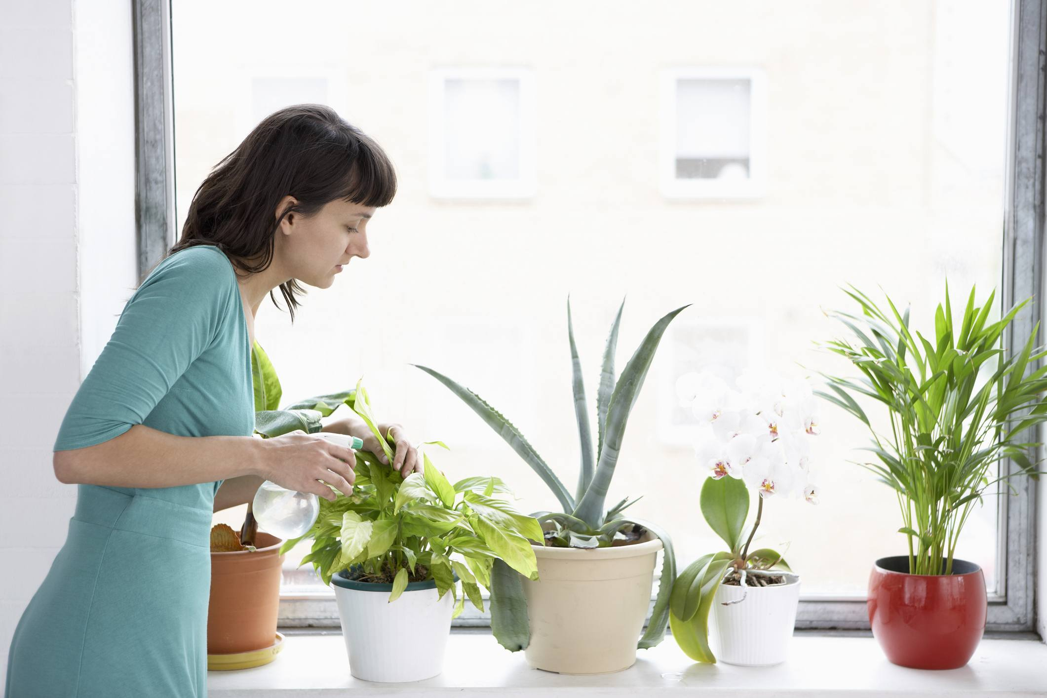 Woman Sprays Plants In Flowerpots