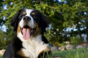 These Are the Most Easygoing Dog Breeds You Can Own