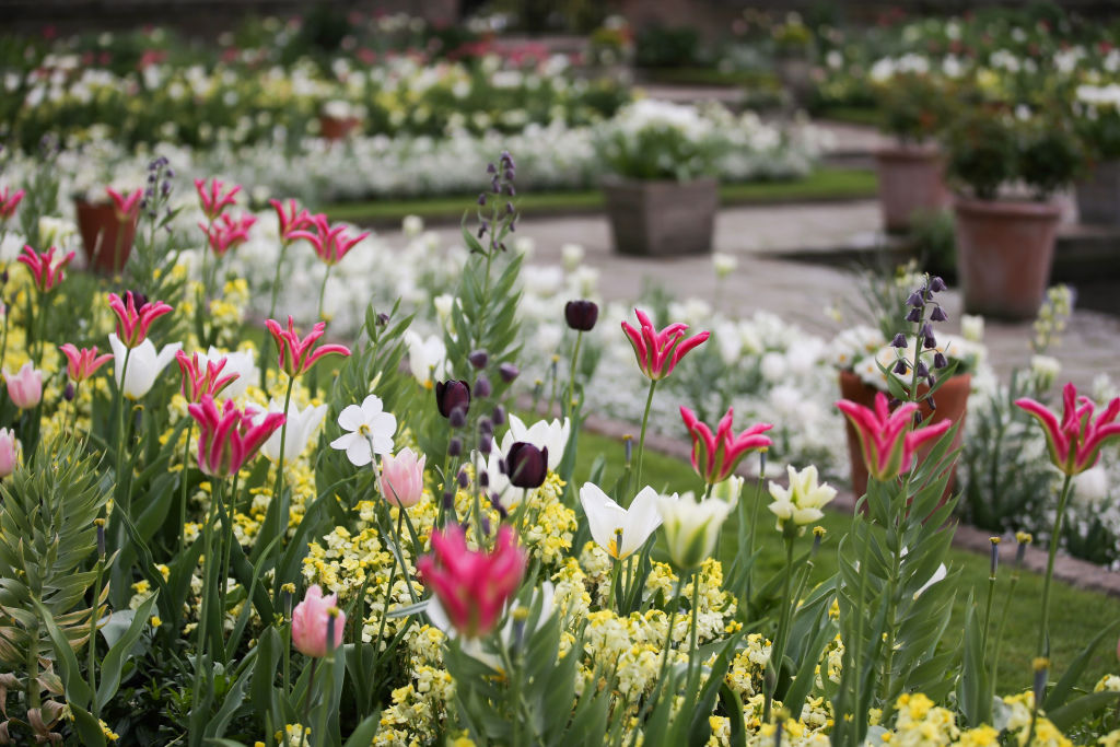 Blossoms are seen in the White Garden Formerly known as the Sunken Garden at Kensington Palace in north London