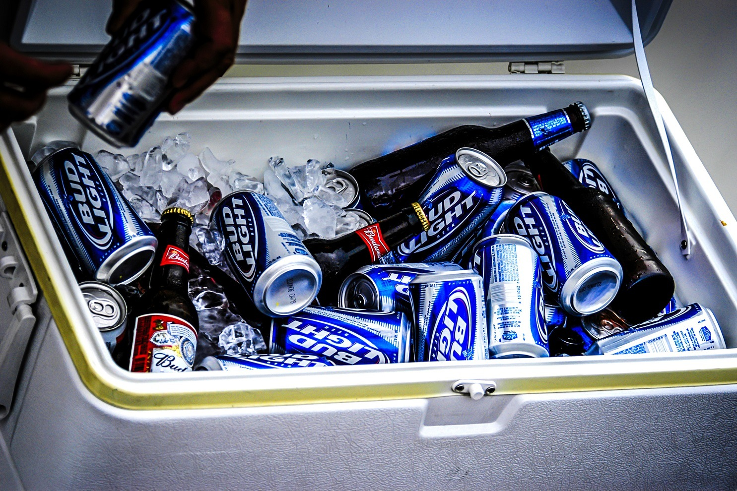 Cans and bottles of Budweiser Light in an cooler box.