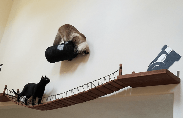 Two cats playing on an obstacle course.