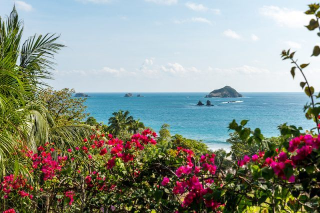 A Costa Rican beach filled with bright flowers and plants.