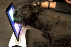 Video Games for Dogs Exist, and They Make Your Dog Smarter