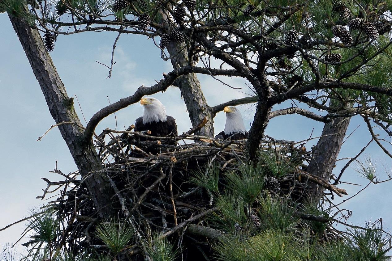 Eagles mates