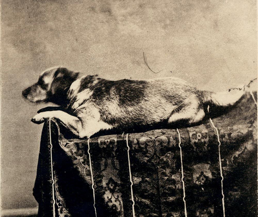 Fido, Abraham Lincoln's dog